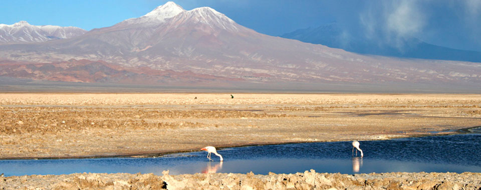 Trails of Atacama Desert