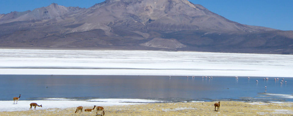 About Altiplano