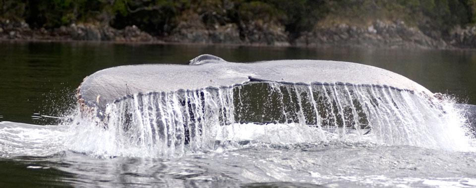 WhaleSound